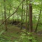 Waldschluchtenweg