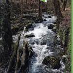 Nette-Natur-Weg